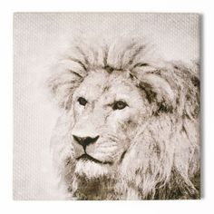 Graham and Brown 20 in. x 20 in. Roar Printed by Graham and Brown Canvas Wall Art - The Home Depot Lion Wall Art, Framed Wall Art, Canvas Wall Art, Wall Prints, Painting Prints, Canvas Prints, Art Print, Paintings, Wal Art