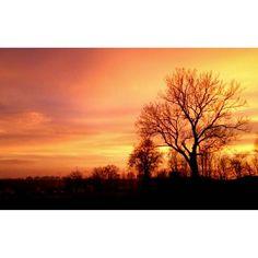 Pięknie <3 #bialystok #sunset #burningsky #landscape #burning #tree #streetphotography #photography
