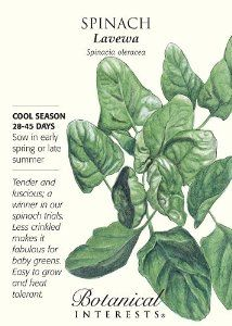 Lavewa Spinach Seeds - 3 grams - Botanical Interests by Hirts: Seed; Vegetable. $2.39. Cool Season. 28-45 Days. Easy to Grown. Tender and luscious. 3 grams of seed. 28-45 days. Rich green color on productive plants, Lavewa is an open-pollinated variety that competes with hybrids for excellent flavor, heat tolerance and mildew resistance. Spinach is high in vitamins, minerals and antioxidants, and low in calories. This packet plants two 10-foot rows.