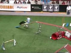 Great world cup dog agility bloopers