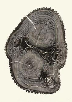 Beautiful Photos Of Tree Rings