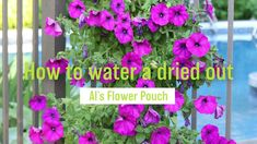 Don't worry if your Al's Flower Pouch gets a little too dried out. A hot windy day can really damage potted plants. Here's how to restore them. #torontolovesplants #alsflowerpouch #afp #amahort #amasolutions #verticalgarden #verticalgardening #gardenideas #gardeninspiration #wallbag #flowerbag #plants #greenthumb #website #launch