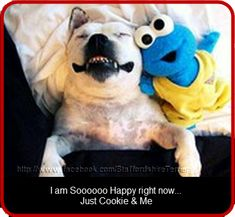 Funny pic with staffy