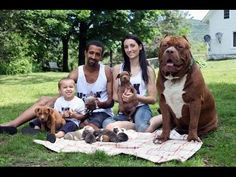 Dark Dynasty Ks DDK Pinterest Dark - The worlds biggest pit bull just became a dad wait until you see his puppies