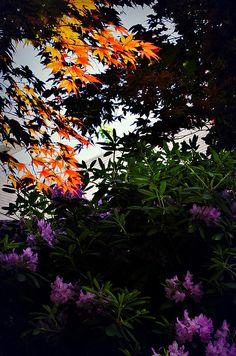 Orange And Purple