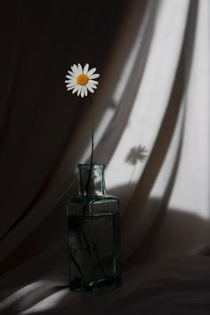 ✯ The Daisy Stands Alone✯ - Simple, strong, beautiful. Shadow Photography, Tumblr Photography, Still Life Photography, Nature Photography, Indoor Photography, Flower Aesthetic, White Aesthetic, Aesthetic Vintage, Aesthetic Backgrounds