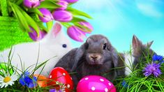 Happy Easter Images Wallpapers Greetings Status For Whatsapp Easter Bunny Wallpaper for Laptop Related Funny Easter Bunny, Easter Bunny Pictures, Happy Easter Wallpaper, Holiday Wallpaper, Hd Wallpaper, Wallpapers, Happy Easter Messages, Happy Easter Bunny, Easter Colors