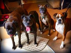 Boxers are like potato chips... You can't have just one!!