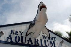 Key West Aquarium #dreamkeywestvacation #MarriottCourtyardKeyWest  We always have to visit the Aquarium!