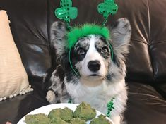 Need an easy way to celebrate Saint Patrick's Day with your dog? What says Saint Patrick's Day better than an easy St. Paddy's Day inspired treat recipe for your … Green Bean Baby Food, How To Make Greens, Pet Dogs, Pets, Green Food Coloring, Homemade Dog Treats, Saint Patrick, Dog Treat Recipes, Crazy Dog