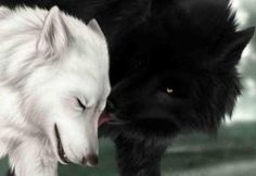 Wolf Alpha Male And Female | In a wolf pack only the leaders – the alpha male and female wolves ...