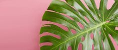 Indoor Potted Plants Delivered to Your Door | The Sill | The Sill