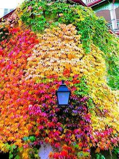 A lamp among the foliage.