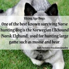 Daily Histoire we had a elk hound when I was a kid hobo was a great dog Norse Pagan, Old Norse, Norse Mythology, Viking Facts, Viking Quotes, Thor, Viking Life, Viking Men, Nordic Vikings