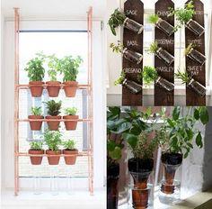 Graines d/'herbe-Ciboulette ail 110 Graines-Maison et jardin-microgreen adapté