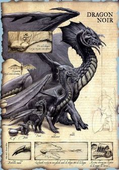 Dungeons And Dragons, Dnd Dragons, Cool Dragons, Fantasy Creatures, Mythical Creatures, White Night Game, Mythological Animals, Dnd Art, Dragon Artwork