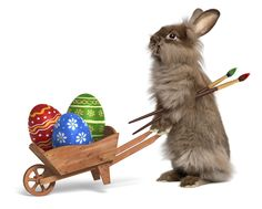 Photo about Cute Easter bunny rabbit with a little wheelbarrow and some painted Easter eggs, on white, CG+photo. Image of bunny, paint, chocolate - 29428753 Easter Wishes Pictures, Easter Bunny Pictures, Real Easter Bunny, Easter Cats, Happy Easter, Funny Bunnies, Cute Bunny, Bunny Rabbit, Easter History