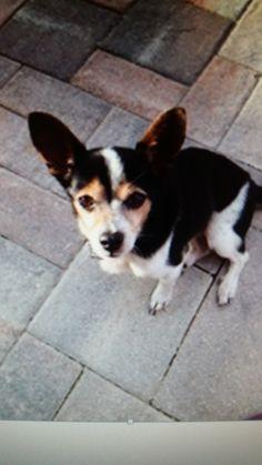 Helping Lost Pets | Dog - Mix - Reunited
