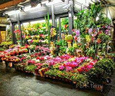 """Fiore""  #fiori #roma #rome #italy #italia #repostromanticitaly #flower #lazio #noidiroma"