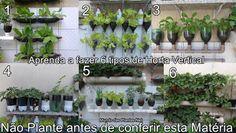 Mundo das Plantas : 6 Ideias para Você fazer uma Horta Vertical