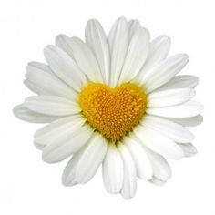 I love daisies and this is special, I love hearts too <3