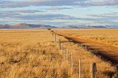 Karoo road in the Conway district between Cradock and Middelburg, Eastern Cape.