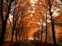 Rays of Light in Autumn