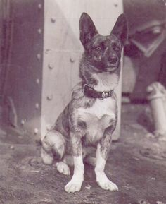 This is Joey, HMCS Iroquois mascot. Joey was picked up in Russia in 1942 and named after Joseph Stalin. (photo source: myrcn.ca )