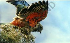 Fiordland Wildlife & Nature