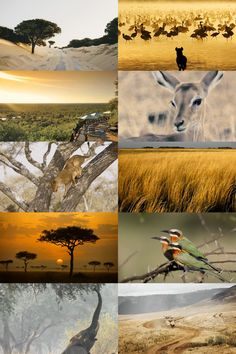 Ecosystems → The Savannah: a mixed woodland grassland ecosystem characterised by the trees being sufficiently widely spaced so that the canopy does not close. The open canopy allows sufficient light to reach the ground to support an unbroken herbaceous layer consisting primarily of grasses.