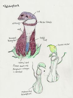 The Carnivorous Plants, II: Rival tribes of carniverous plants wage war in the forest of Beaverhell. Until a sinister poacher compromises their very eco-system. Pitcher Plant, Carnivorous Plants, Botanical Illustration, Homework, Diagram, Education, Art, Flowers, Art Background