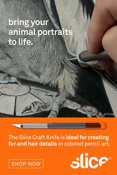 Bring Your Animal Portraits To Life Cool Art Drawings, Art Sketches, Pencil Drawings, Colored Pencil Techniques, Sketching Tips, Acrylic Painting Lessons, Art Tutorials, Painting Tutorials, Color Pencil Art