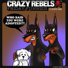 Family first. The Rebel pack always sticks together :) #doberman #maltese #crazyrebels