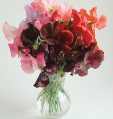 Oh Sweetpea, I can almost catch your soft, unassuming fragrance.  I think it is the scent of a smile.