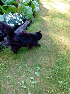 #wilmucat #cat