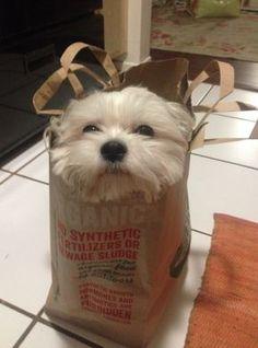 My kind of doggie bag.....