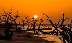 Sunrise over Boneyard Beach at Botany Bay Plantation July 11,  2014 in Edisto Island, South Carolina. Each year 144,000 cubic yards of sand is washed away with the waves at the beach and nearshore eroding the coastal forest along the beachfront. The Guardian - act on climate change now...