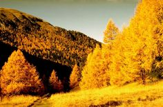 Lärche im Herbst Monument Valley, Places To Go, Trees, Mountains, Nature, Destinations, Fall, Tree Structure, Nature Illustration