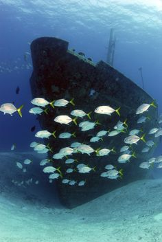 Explore the shipwrecks around the islands of the Bahamas