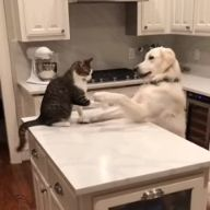 """Getz off da counter stoopid Kat!"" ""Climb up here stoopid dogg!!"""