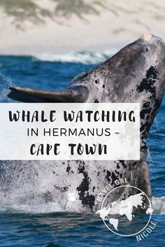 Hermanus is a small town about an hour and a half south of Cape Town and best known for whale watching from July – November the Southern Right Whale. Most people use it as a quick stop over but I wanted to spend a few extra days here.