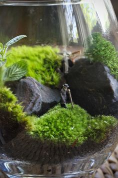 Eight Oaks Terrariums