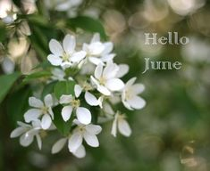 Can you believe we're almost halfway to the end of the year? Seasons Months, Days And Months, Months In A Year, 12 Months, Pretty Photos, Beautiful Pictures, What Month, Happy June, Hello June