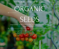 Home Grown Vegetables, Organic Seeds, Sprouts, Herbs, Diet, Fruit, Natural, Healthy, Green