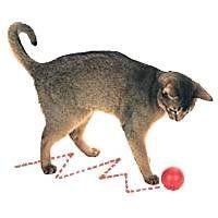 $9 Go!Cat!Go! Zig-N-Zag Ball Cat Troy