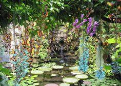 Trepadeiras de flores pendentes, como a jade e a sapatinho-de-judia além de emoldurarem são ótimas para serem admiradas por baixo em caramanchões por exemplo. Foto de Miles Berry