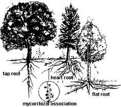 ISUE - Tree Roots