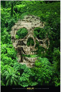 Woody Pirtle - Greenpeace, Rainforests