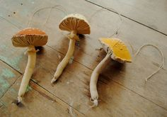 Soft sculpture mushrooms by Willowynn
