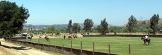 Herring Ranch's hybrid polo field